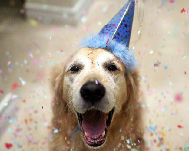 Party-Dog-1280x1024